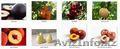 Саженцы (привитые,  карликовых,  полукарликовых и классических) плодовоягодных. )