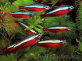аквариумные рыбки в Алматы(КАЖДАЯ 10 РЫБКА БЕСПЛАТНО!)