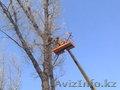 Спил деревьев в Алматы и Алматинской области!!!