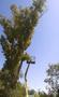 Спил деревьев в Алматы и Алматинской области!!! (НЕ ДОРОГО!!!)