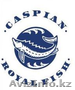 Осетровая ферма ТОО «Caspian Royal Fish» продаст Остеров и Стерлядь