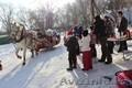 катание на санях,  запряженные  белой лошадью – зимнее развлечение для детей и вз