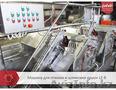 Машина обработки кишок КРС Feleti от производителя!