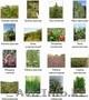Озеленение - Газоны,  Цветник,  Дорожки,  Водоёмы,  Системы полива.